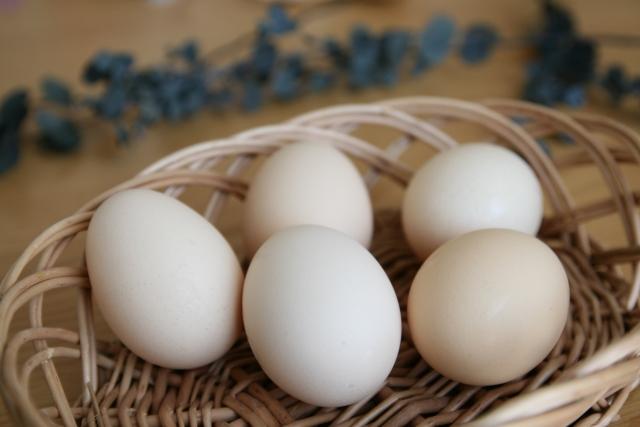 卵殻膜パックが小鼻の黒ずみに効く?!その効果と使い方とは?