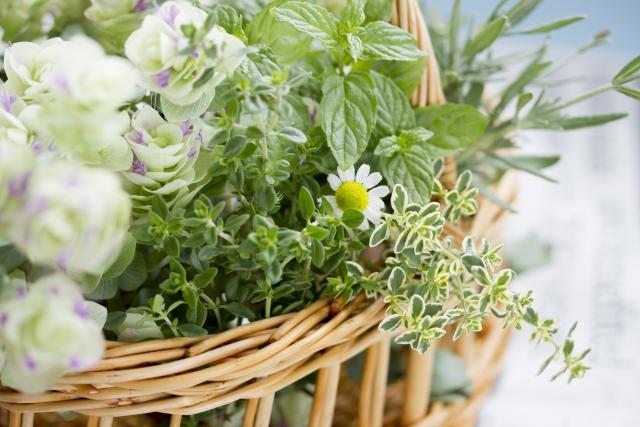 植物由来のオーガニック毛穴ケア。【ハマメリスエキス】とは?