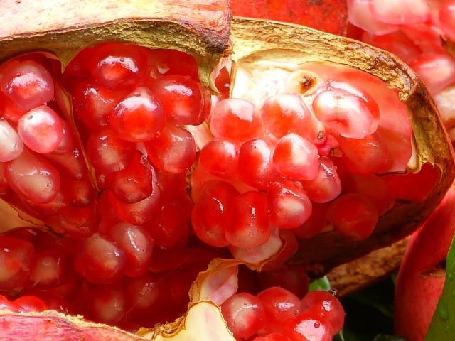 不思議な魅力の果実。クセのある味がやみつきに…赤の魔力『ザクロ』は女性をキレイに変身させる!?
