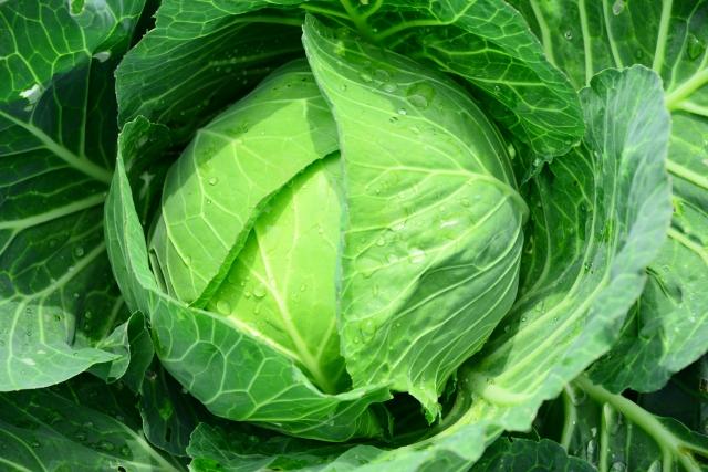 もはや主役!あの定番野菜にびっくり効果?美肌からバストアップまで…万能野菜『キャベツ』の美容にイイその効果とは?